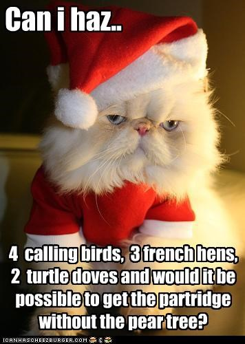 12 days of cat christmas