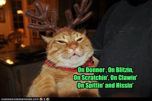 Christmas cat reindeer