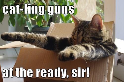 pew pew cat box