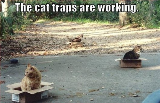 cats in boxes cat traps