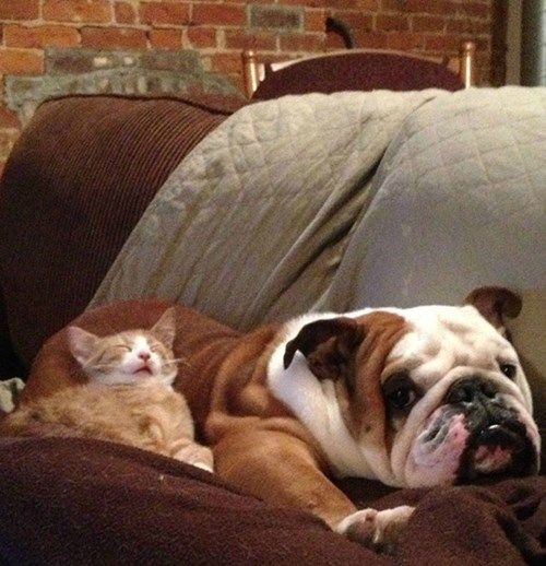 cat is passed out with the dog keeping watch