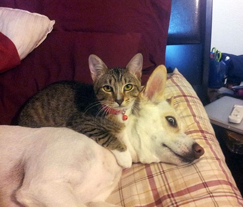 cat dares  dog to move and ruin the comfy