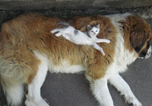 Fluffy doggy pillow for cat