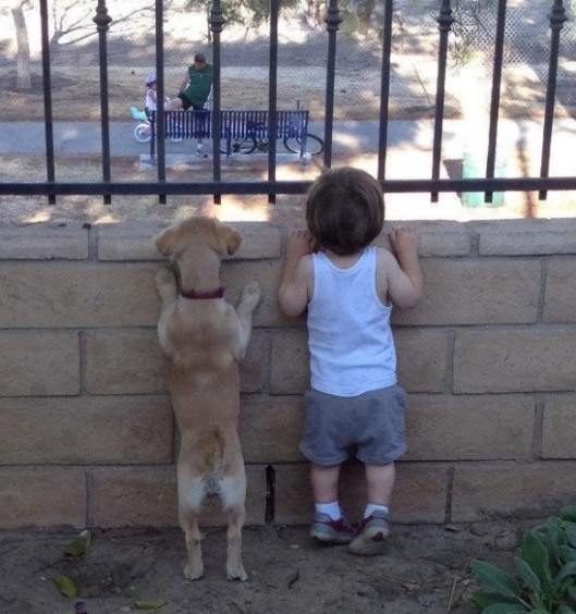 puppy child conspirator