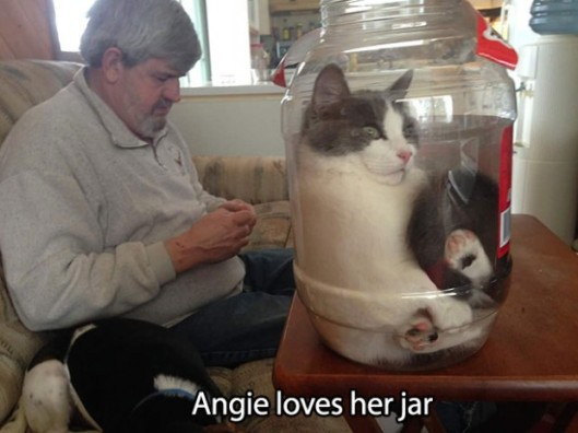 Angie cat loves her jar
