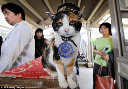 Tama Japanese cat stationmaster