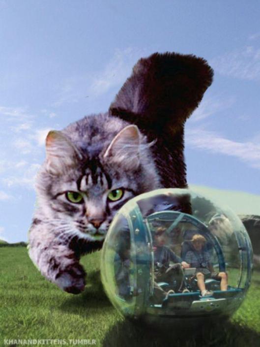 cat hamster ball jurassic world park