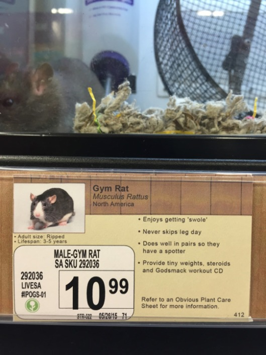pet store joke rat