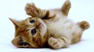 kitten adorable love me take me home