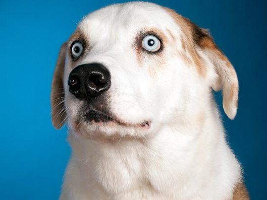 surprised dog detects cancer