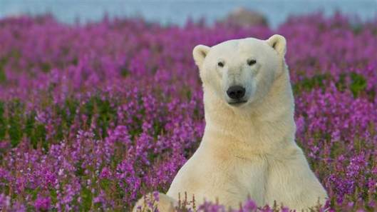 bear-frolicking-flowers-today-tease-150822_dd1ed0a3cbdb9d5615796851572a2dc9.today-inline-large