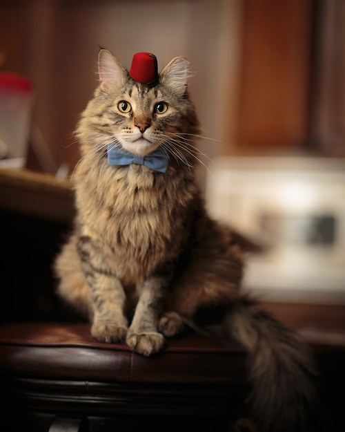 The Eleventh Doctor Who cat cosplay
