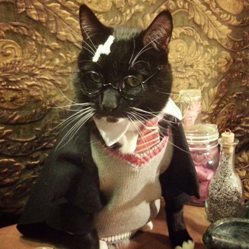 Harry Potter kitty cosplay