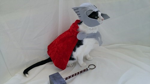 Thor kitty cosplay
