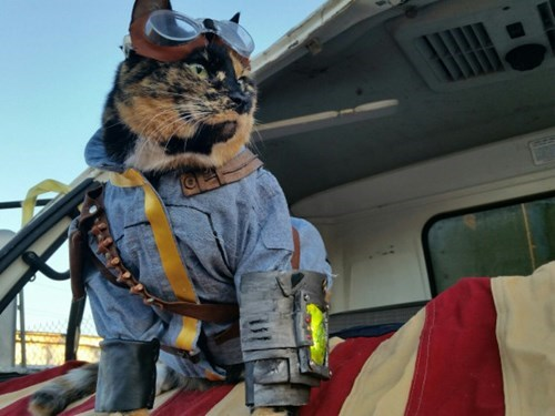 Wastes cat costume