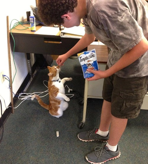 cat treats at school