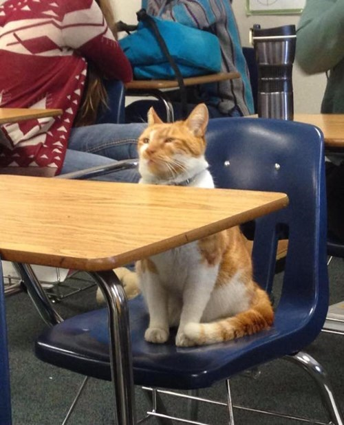 Bubba the cat in class