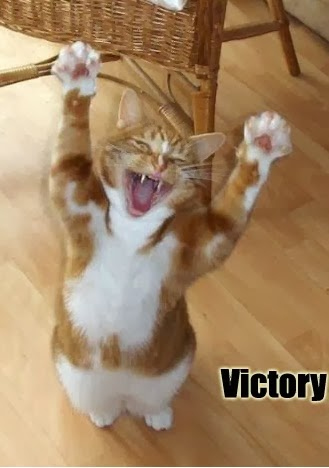 Victory cat