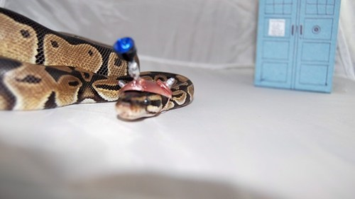 Dalek Doctor Who Hat snake