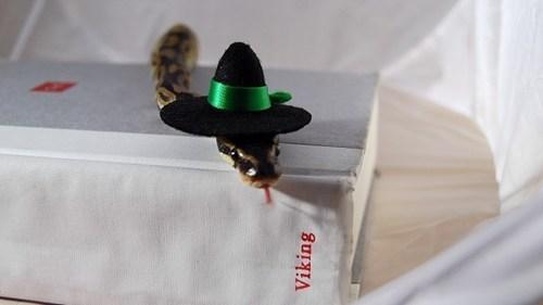 Quaker hat snake