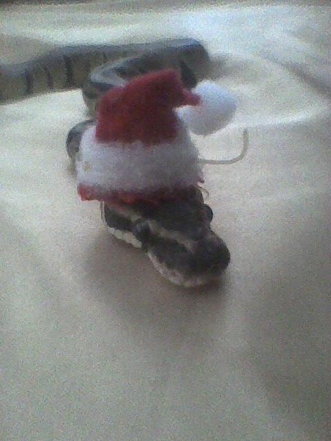 Santa hat snake