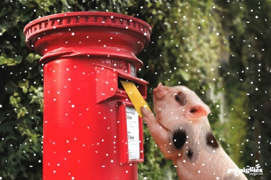 Christmas piggy mails letter to Santa
