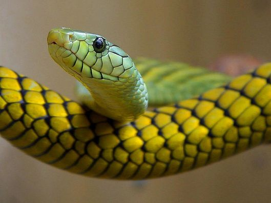 green snake is secretly slimy