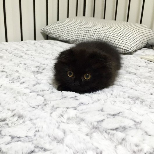 Little kitten loaf