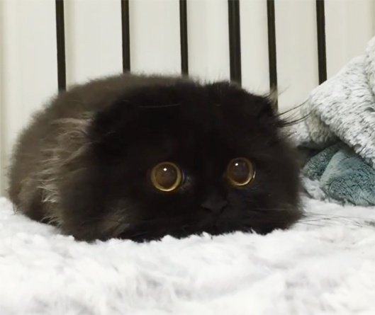 great big kitty eyes