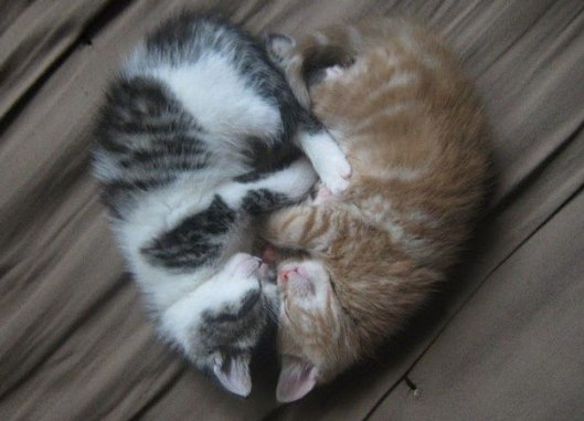 cute kitten heart