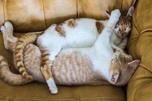 cuddling snuggling