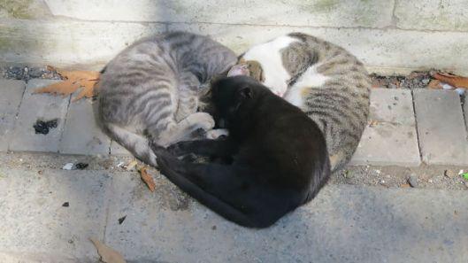 Heart cuddling cats