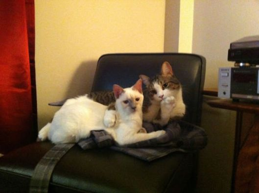 cats posing