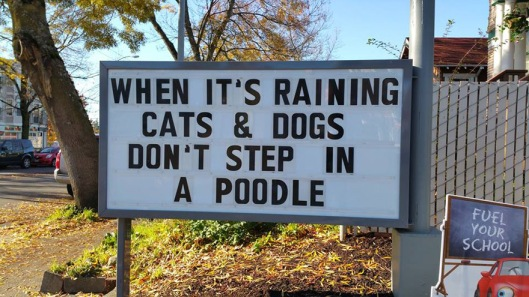 When it's raining cats and dogs, don't step in a poodle.