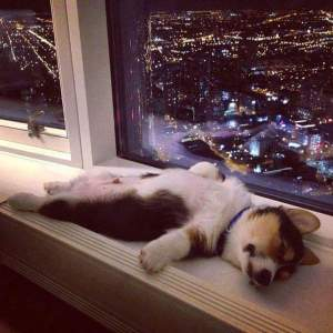 Not appreciating the view, too busy sleeping