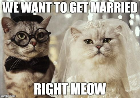 Marry us right meow