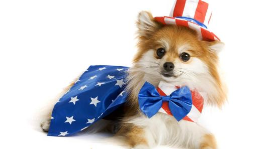 This dog wishes you a happy fourth of july