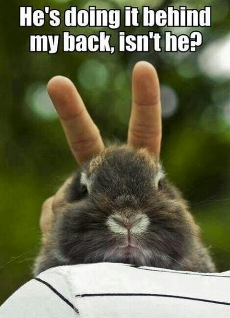 bunny ears on rabbit for easter